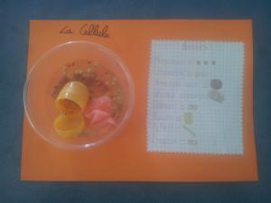 cellula IV D